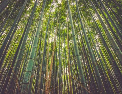 The Great Sustainable Clothing Debate: Organic Cotton vs Bamboo
