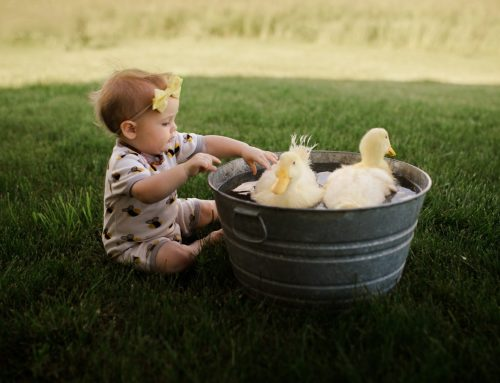 Why Pets Can Be Positive For Your Kids